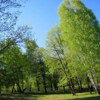 Лес весной, Бавлы