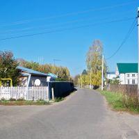 Васильевская дорога к речке//Vasilyevo road to the river, Васильево