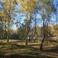 Берёзки на берегу//Birches on the shore, Васильево
