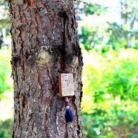 Заговоренное дерево, Васильево
