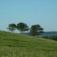 Деревья на склоне, Верхний Услон