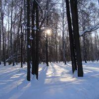 Зимний лес, Высокая Гора