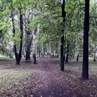 Ленинский сад, Тетюши