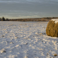 Первый снег (ноябрь 2013г.), Александровское