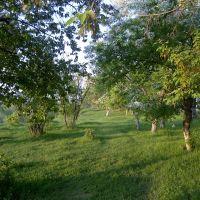 Эдемский сад в Зырянке, Зырянское