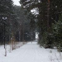 Аллея в парке, Колпашево