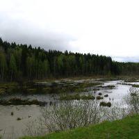 Болотина, Кривошеино