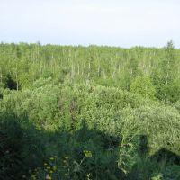 Шегарское болото летом. Потрясающе!)), Мельниково