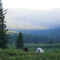 Лошади и Ежик перед туманом...., Тээли
