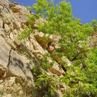 Солнечные склоны, пос. Барсуки, Барсуки