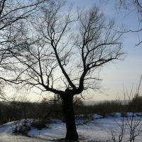 Дерево у пруда, Велегож
