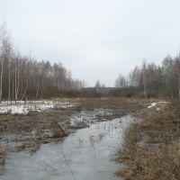 Весенний лес., Казановка