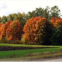 Золотая осень, Кимовск