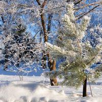 Маленькой сосеньки холодно зимой., Узловая