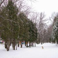 Городской парк, Щекино