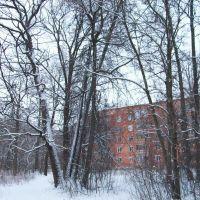 Большой дом рядом с лесом, Щекино