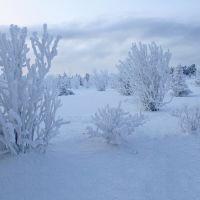 Югорская зима, Когалым