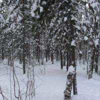 17.11.2011 #1, Излучинск