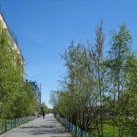 Муравленко июнь 2013, Муравленко