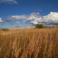 трава, Губкинский