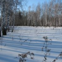 зимний лес, Бердюжье