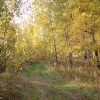 Осенний лес, Бердюжье