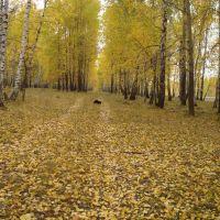 Собака взяла след, засыпанный листьями, Большое Сорокино