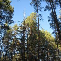 Кроны деревьев, Винзили