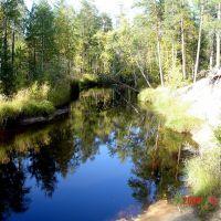 лес, Заводопетровский