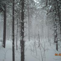 Морозный туман, Заводопетровский