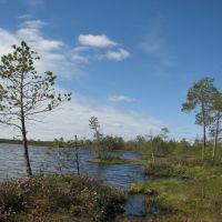 Shore lake, Заводопетровский