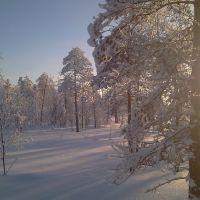 Зимний лес 2013_01, Заводопетровский