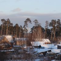 Пейзаж с соснами, Заводоуковск