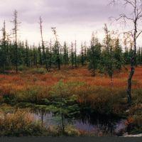 Осенние краски лесотундры, Тазовский