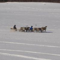 Deer racing, Тарко-Сале