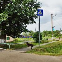 Собаки отдыхают в тени деревьев. Село Завьялово, Завьялово
