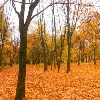 Осенняя природа, Красногорское