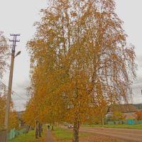 Береза, Красногорское