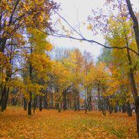 Осенний парк, Красногорское