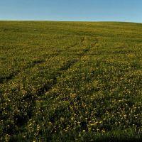 поле у Эрестема/вид на юг, Устинов