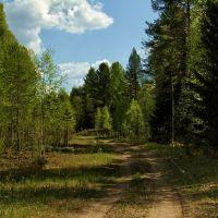 лесная дорога/вид на северо-восток, Устинов