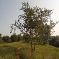 Дерево, Юкаменское