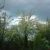Весна 1, Барыш