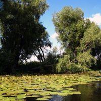 На озере, Игнатовка