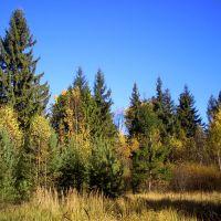 поляна возле струнино, Дарьинское