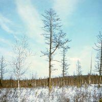 Зимняя тайга, Казталовка
