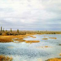 Озеро на болоте, Сайхин