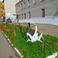 Лебеди на свободе, Николаевск-на-Амуре