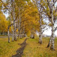По березовой тропе, Николаевск-на-Амуре