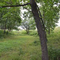 Лес 2, Переяславка
